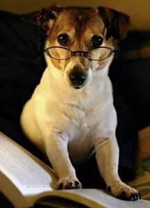 Smart Canine