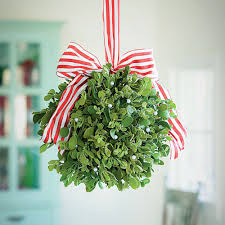 mistletoe can be harmful to your dog if ingested